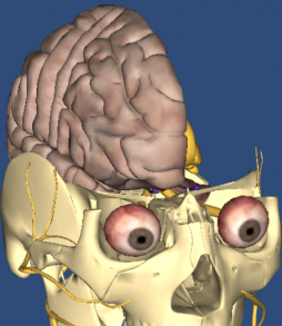 Creative Right Side of Brain